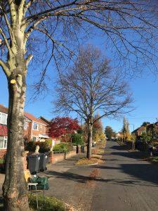 Street Trees on Middlefield Road