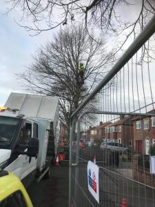 Doncaster Tree Felling
